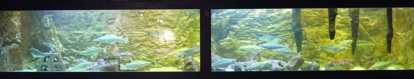 aquarium du recif