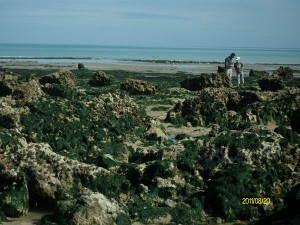 Aujourd'hui, c'est toi le scientifique du littoral ! @ Parking de l'Huîtrière | Hautot-sur-Mer | Normandie | France