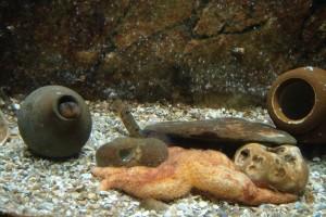 Nourrissage des aquariums en public @ ESTRAN Cité de la Mer