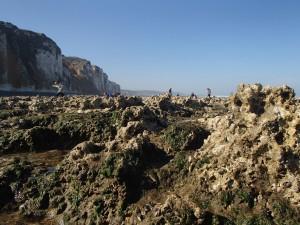 Parcours du littoral à marée basse à Saint Martin en Campagne @ Sur la plage devant la descente de bateaux | Saint-Martin-en-Campagne | Normandie | France